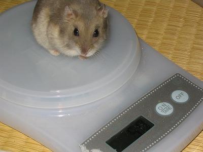 ひと月前の体重は57gやで