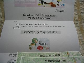 2000円( ̄m ̄〃)