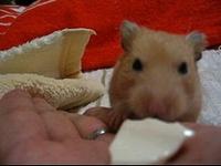 豆腐をいただきマンモス