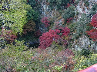 紅葉 箕面の滝